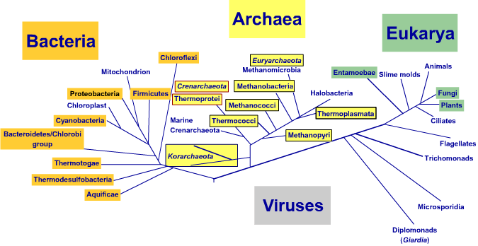 Tree of life image covering bacteria, eukarya, archea and viruses